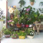 Imágenes de plantas de interior