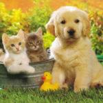 Fotos de gatitos tiernos