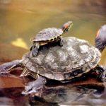 Imágenes de tortugas