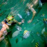 Imágenes de Snorkel