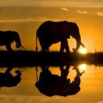Imágenes de África