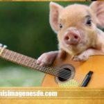Imágenes de cerdos