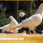 Imágenes de palomas