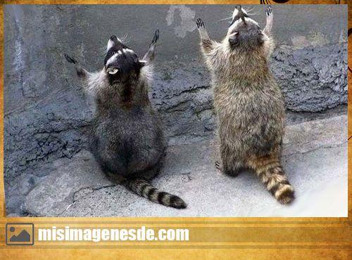 animales graciosos imagenes