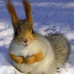 Animales y bebes bonitos imágenes