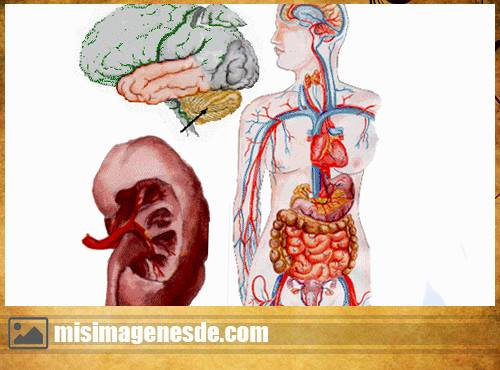 imagenes de el cuerpo