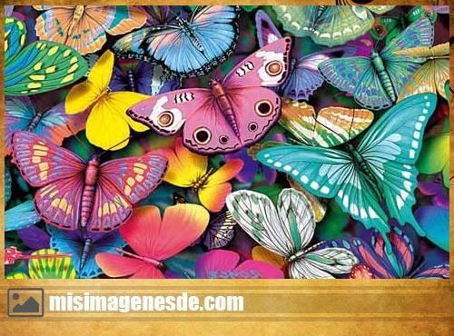 imagenes de mariposas