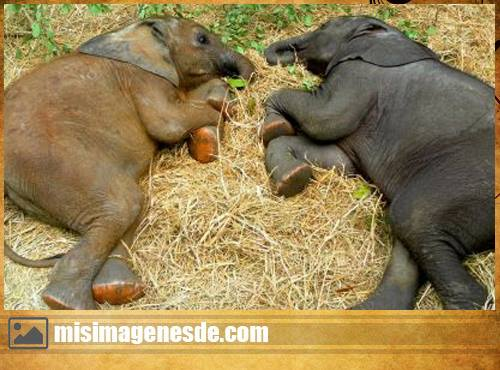 elefantes lindos