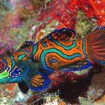Imágenes de peces