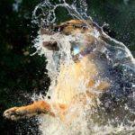 Imágenes de perros