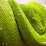 Imágenes de serpientes