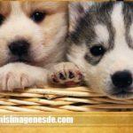 Fotos de perritos bebes
