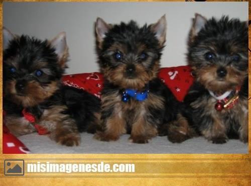 fotos de perritos
