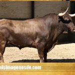 Fotos de toros