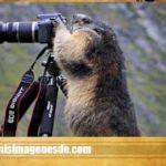 Imágenes de animales graciosas