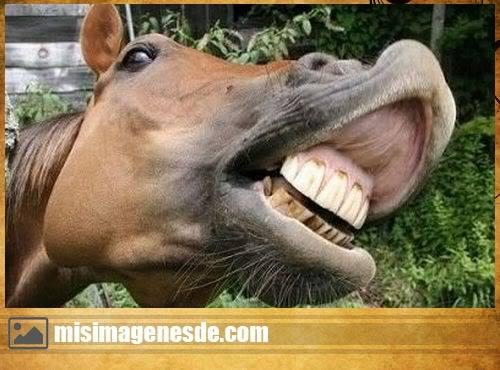 animales graciosas