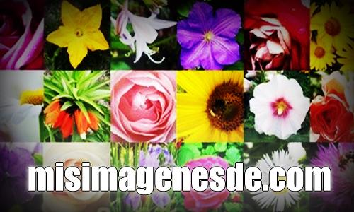misimagenesde-flores