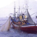 Imágenes de pesca