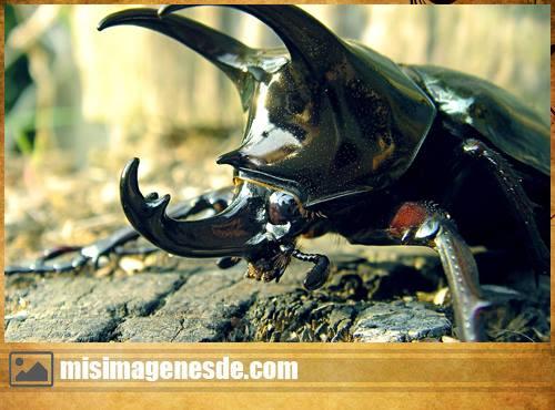 imagenes de insectos raros