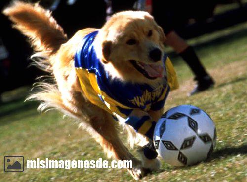 imagenes de futbol
