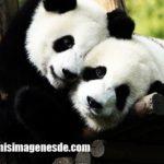 Imágenes de abrazo