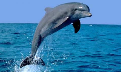 animales acuaticos