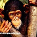 Imágenes de animales omnivoros