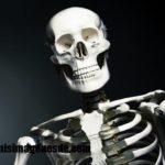 Imágenes de esqueleto