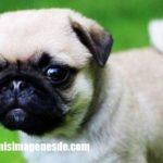 Imágenes de fotos de cachorros