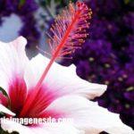 Imágenes de fotos de flores