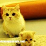 Imágenes de gatos bebes