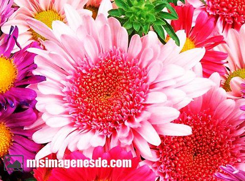 imagenes de flores