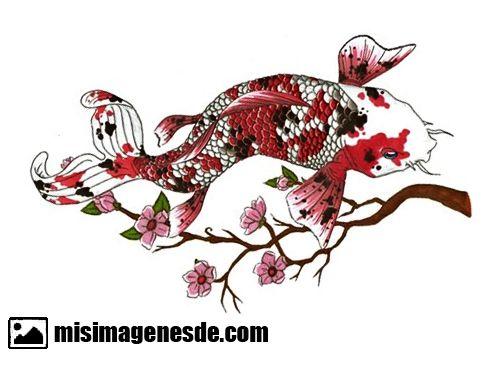 Imágenes de pez Koi | Imágenes