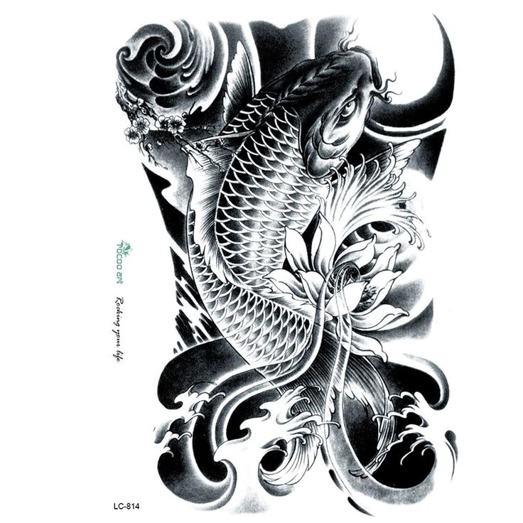 Im genes de pez koi im genes for Black dragon koi