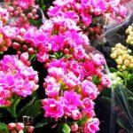 Imágenes de tipos de flores