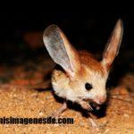 Imágenes de animales del desierto