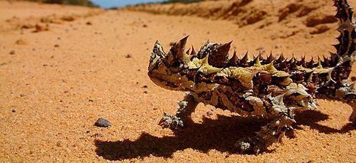 animales del desierto