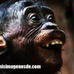 Imágenes de animales graciosos