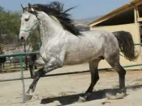 caballos finos