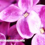 Imágenes de color lila