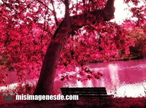 color rosa