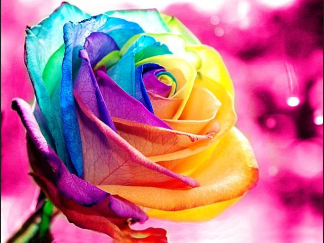 colores rosas