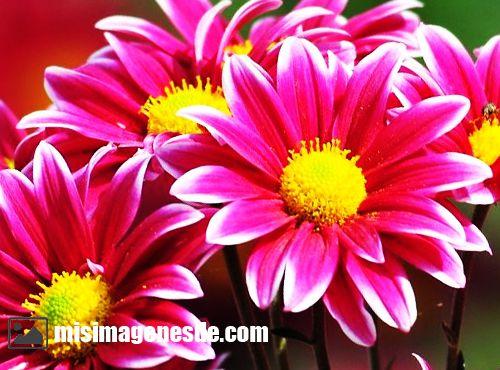 Imágenes de flores bonitas | Imágenes