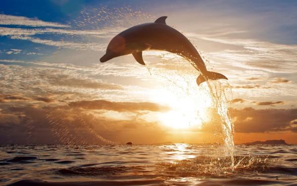 fotos de delfines