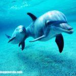 Imágenes de fotos de delfines