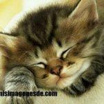 Imágenes de gatos tiernos