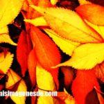 Imágenes de hojas de otoño
