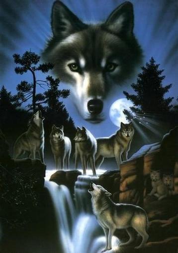 imagenes de lobos