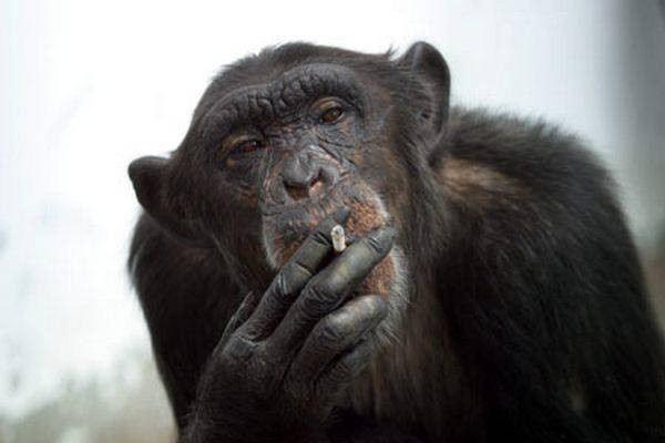 imagenes de monos