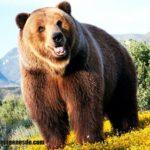 Imágenes de osos